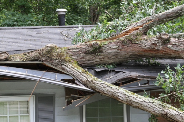 House Roof Crushed By a White Oak Tree